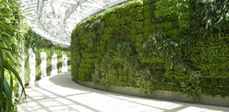 Green walls and Garden from Ambius