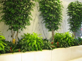 St. Louis hotel goes green art is an example of green buildings for the World Green Building Council