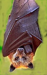 Deadly bat disease confirmed in Arkansas