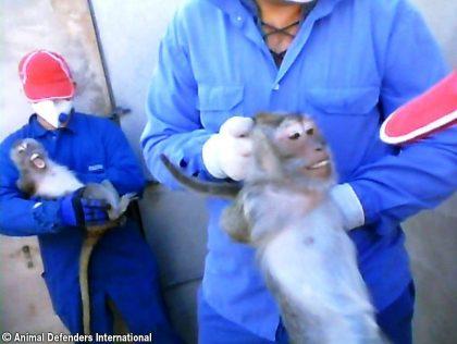 1_ADI_monkey_investigation