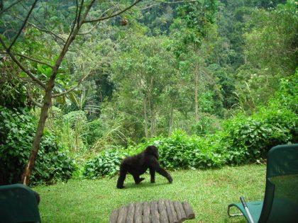Mount Gahinga Lodge with Batwa Indigenous Area becomes an Eco Travel