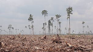 Deforestation leads to lack of water and food