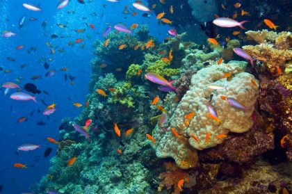 Great Barrier Reef affected by clothes