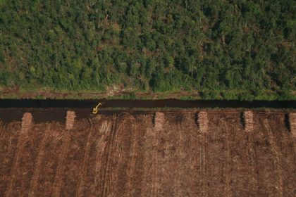 Deforestation and Dramatic growth in laws to protect environment, but widespread failure to enforce, finds report