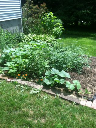 talk to your blog audience about organic gardens, using eco friendly mulch, organic topsoil, organic seeds
