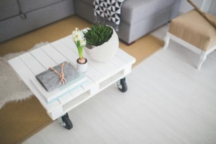 Plants In your home and Office