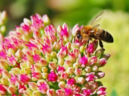 Millions of dead bees, millions more signatures highlight threat to bees & other pollinators