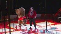 ADI statement regarding death of circus animals in traveling