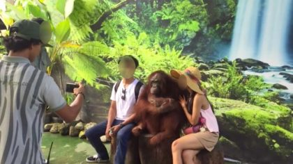 Indonesia zoo Animals Asia, Scorpion Foundation and Change for Animals Foundation