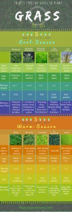 10 popular types of grass to plant in all season