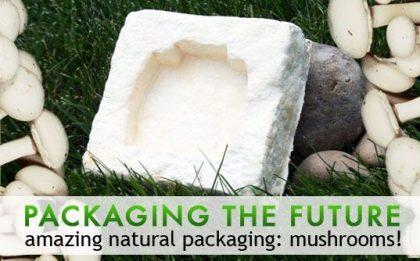 Bamboo and mushroom packaging
