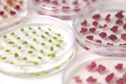 Used Car Guru >> preview:New way of producing useful compounds from birch for the cosmetics cell cultures