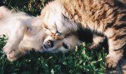 Cat and dog on mattress