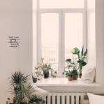 Indoor plants are the best for indoor air quality