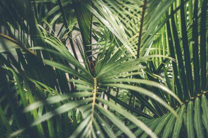 Palm tree deforestation