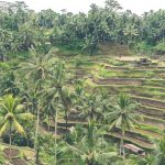 palm oil innovation group poig