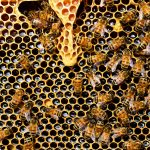 A pesticide to help bees was recently approved by the EPA