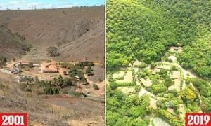 Reforestation of the Amazon rainforest in 10 years