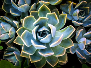 Research studies suggest that having plants around you is a must – it enhances physical and emotional wellbeing and it is a beautiful way to decorate your home. Looking after plants requires a certain amount of care if you want your plants to survive and blossom, but every plant will have different needs.  One of the easiest plants to have and maintain is the Succulent. This one is similar to a cactus and requires little looking after to grow. Although this is a good plant for people who do not want to spend too much of their time worrying about plants, there are still some mistakes people make when it comes to Succulents